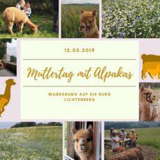 Muttertag: Wanderung mit Alpakas auf die Burg Lichtenberg